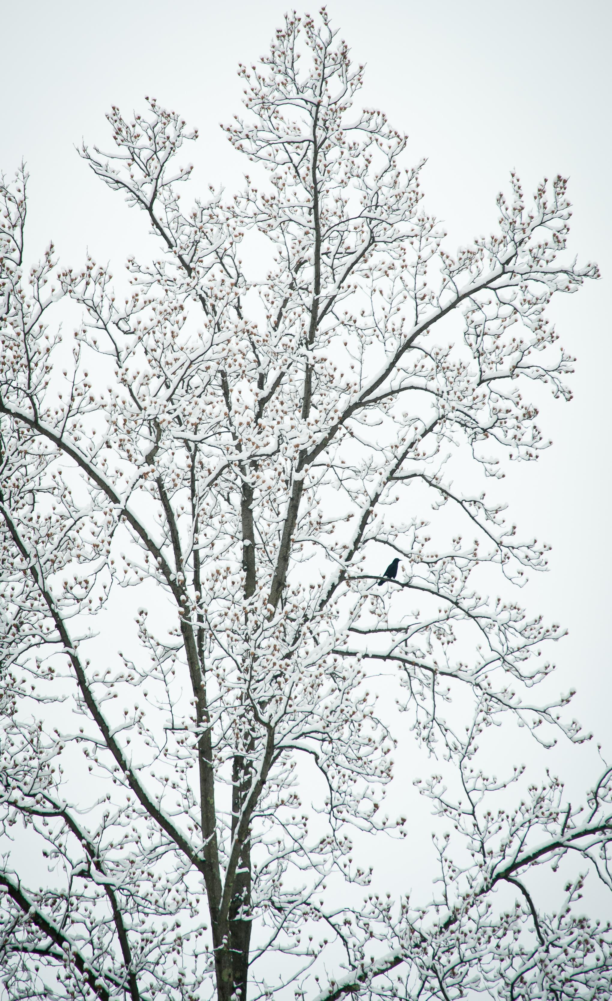 1st_Snow_Woodstock-4