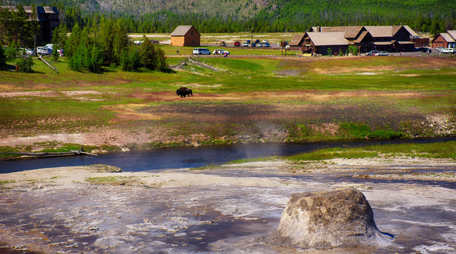 Geyser with Bison Yellowstone National Park